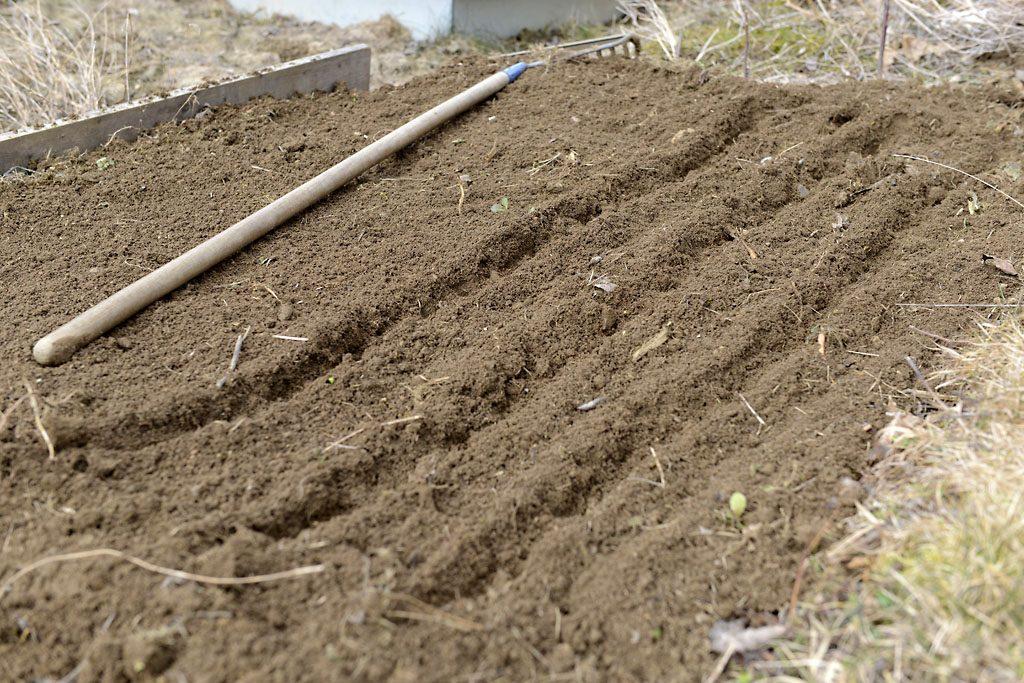 Petzis Garten und Küche: Radieschen anbauen