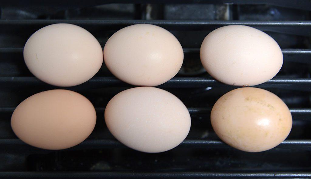 Petzis Garten und Küche: Radieschen-Ernte, für Eierspeis