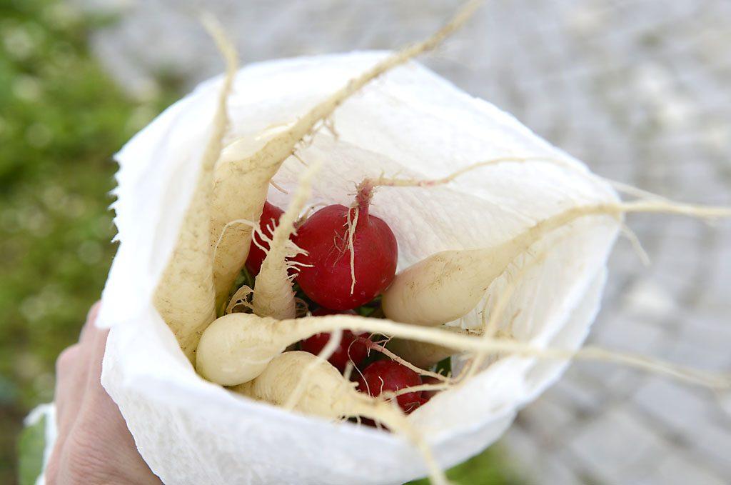 Petzis Garten und Küche: Radieschen-Ernte