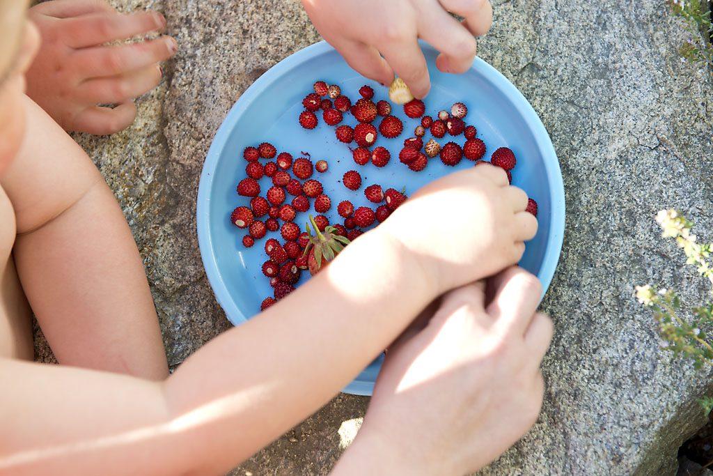 Petzis Garten und Küche: Walderdbeeren, Gartenerdbeeren und Weiße Erdbeeren