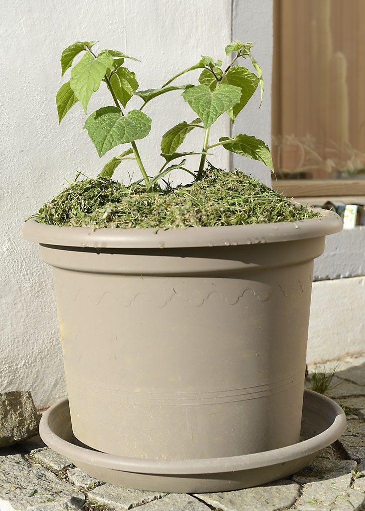 Petzis Garten und Küche: Mulch & Mulchen