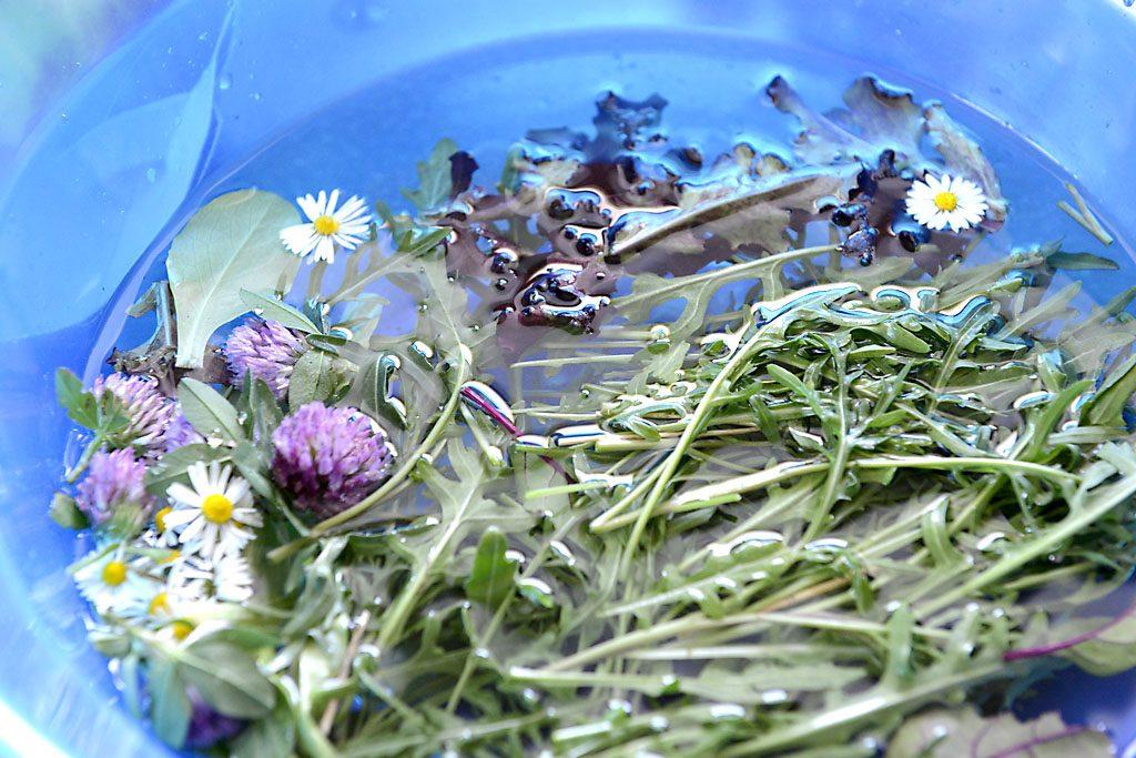 Petzis Garten und Küche: Waldivertler-Frühsommer-Salat